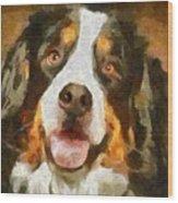 Bimbo - Bernese Mountain Dog Wood Print