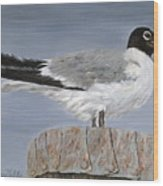 Bimini Gull Wood Print