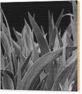 Biological Warfare Wood Print