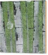 Birch - Green 1 Wood Print by Jacqueline Athmann
