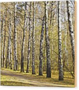 Birch Alley In Autumn Wood Print