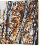 Birch And Oak And Sun Wood Print