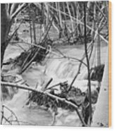Birch And Stream Wood Print