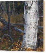 Birch Autumn 3 Wood Print