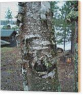 Birch Bark 3 Wood Print