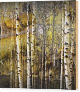 Birch Bark And Trees Abstract Wood Print