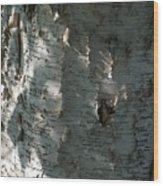 Birch Bark In Sun And Shadow Wood Print
