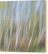Birch Dream #3 Wood Print