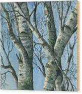 Birch Eye View Wood Print