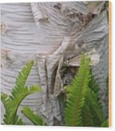 Birch Fern Wood Print