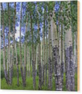 Birch Forest Wood Print by Julie Lueders