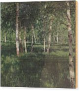 Birch Grove Wood Print