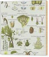 Birch, Hazel, Oak, And Willow Wood Print