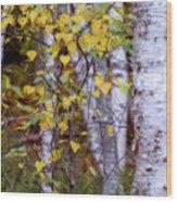 Birch In Autumn Wood Print