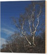 Birch On A Cliff  Wood Print