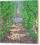 Birch Path Wood Print