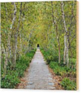 Birch Pathway Perspective Wood Print
