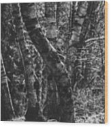 Birch Tree Forest Wood Print