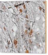 Frost Birch  Wood Print