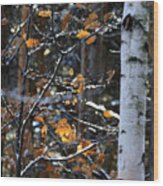 Birch Tree In Winter Wood Print