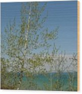 Birch Tree Over Lake Wood Print