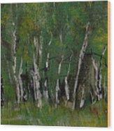 Birch Tree Panorama Wood Print