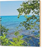 Birch Trees Above Lake Superior Off North Country Trail In Pictured Rocks National Lakeshore-mi Wood Print