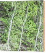 Birch Trees Abstract Wood Print