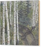 Birch Trees Along Kennys Road  2 Wood Print