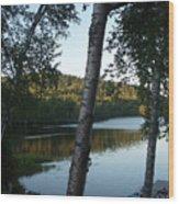 Birch Trees Along The Lake Wood Print