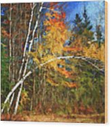 Birch Trees - Autumn Wood Print