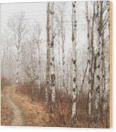Birch Walk Wood Print