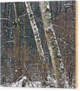 Birches During A Snowfall Wood Print