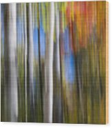 Birches In Autumn Forest Wood Print