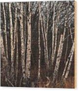 Birches In The Rain Wood Print