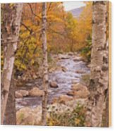 Birches On The Kancamagus Highway Wood Print