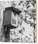 Bird 54 Where Are You Wood Print