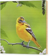 Bird And Blooms - Baltimore Oriole Wood Print