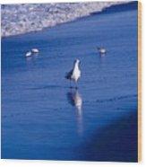 Bird At Ocean's Tide Wood Print