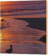 Bird At Sunset Wood Print
