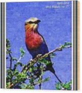 Bird Beauty - No. 7 P A With Decorative Ornate Printed Frame. Wood Print