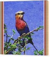 Bird Beauty - No 7 P B With Alternative Decorative Ornate Printed Frame. Wood Print