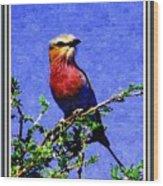 Bird Beauty - No 7 P B With Decorative Ornate Printed Frame. Wood Print