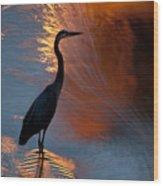 Bird Fishing At Sundown Wood Print
