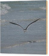 Bird Flying In The Surf 2 Wood Print