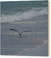 Bird Flying In The Surf Wood Print