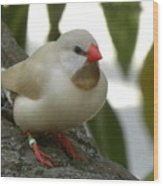 Bird Gazing Wood Print