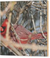 Bird In A Bush Wood Print