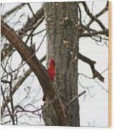 Bird In A Tree Wood Print