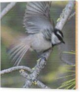 Bird In Action 2 Wood Print